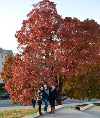 Autumn_Tree_Girls