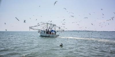 Boat_Birds_Web
