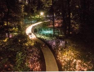 Munro_Lights_Flowers_2_Web