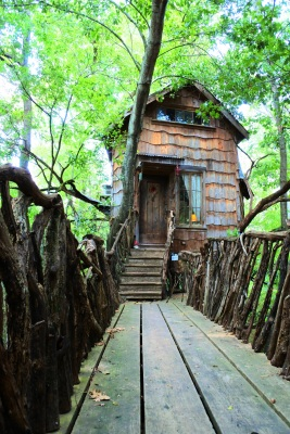 Tree_House_7_pop_Web