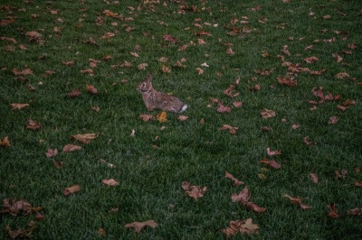 City_Garden_Rabbit_Web