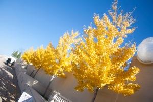 Monona_Terrace_Trees_Web