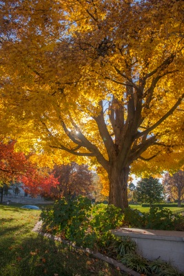 Supreme_Court_Tree_2_Web