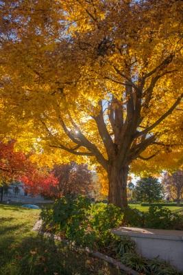 Supreme_Court_Tree_2_Web