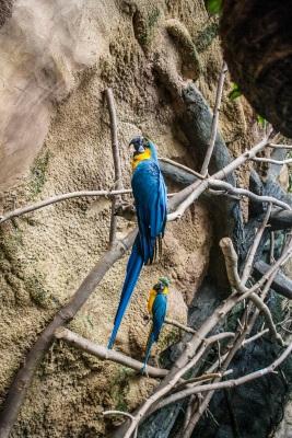 Zoo_Parrot_Web
