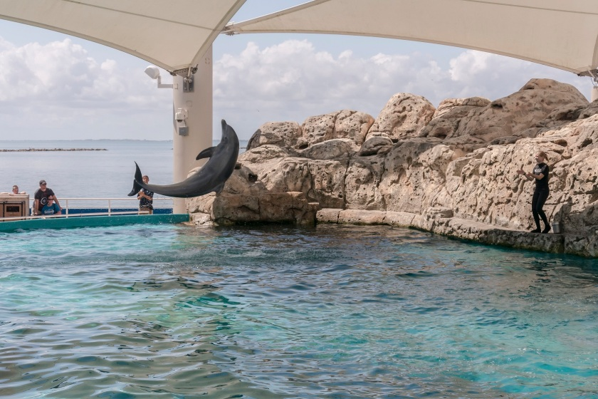 Aquarium_Dolphin_Jumping_3_Web