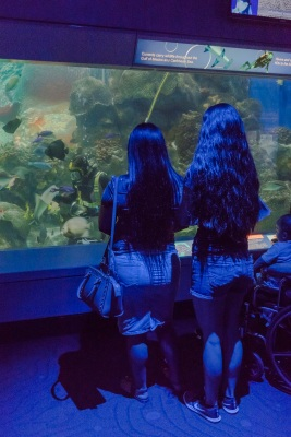 Aquarium_Girls_Feeding_Web