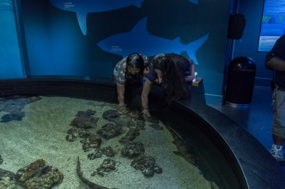 Aquarium_Girls_Sharks_Web