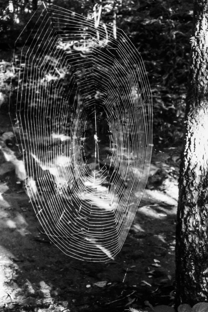 Devils_Den_Spider_Web