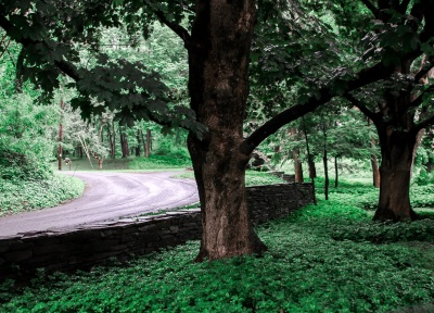 Road_Greenery_2_Web