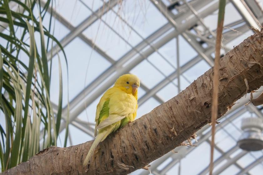 Myriad Botanical Gardens, OK City, LEAP Center, SHSU