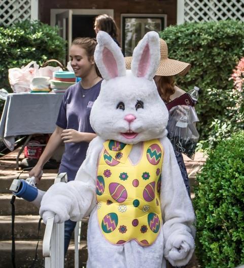 Bunny_Bella_Web