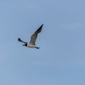 Beach_Bird_Flight_1_Web