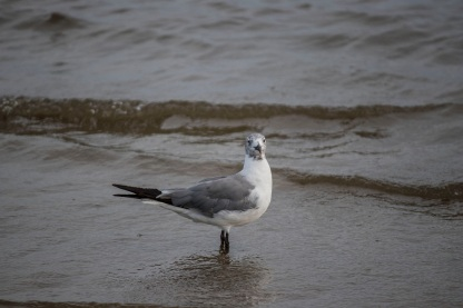 Beach_Bird_Shore_3_Web