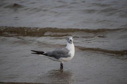 Beach_Bird_Shore_3_Web