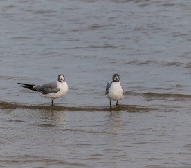 Beach_Birds_Shore_1_WEb