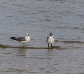 Beach_Birds_Shore_1_WEb