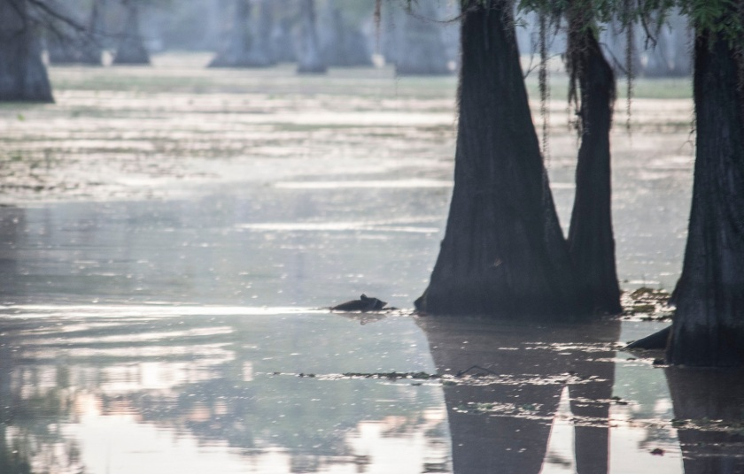 Caddo Lake, SHSU, Documentary, LEAP Center, Photography, Mark Burns