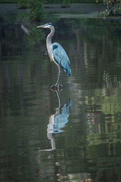 Caddo Lake, SHSU, Documentary, LEAP Center, Photography, Mark Burns