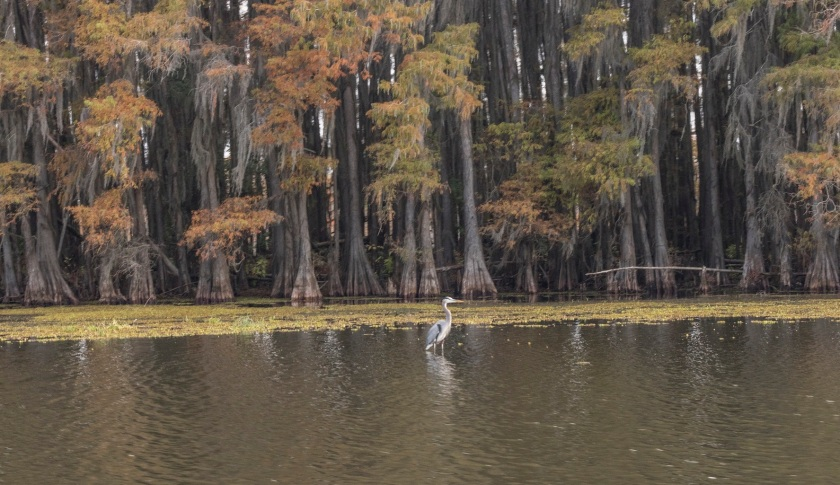 SHSU, LEAP Ambassadors, LEAP Center, Caddo Lake