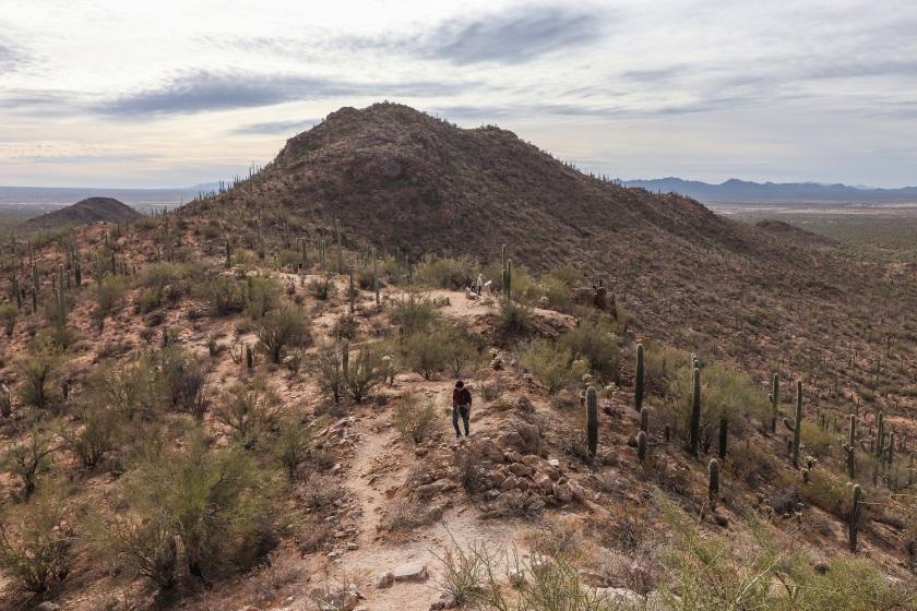 SHSU, LEAP Center, Saguaro National Park, Arizona, Tucson
