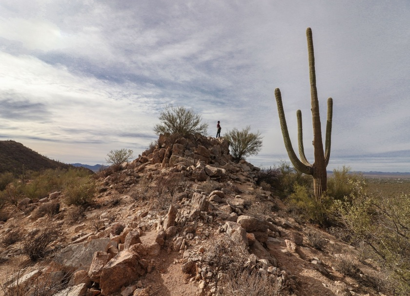 SHSU, LEAP Center, Saguaro National Park, Arizona, Tucson, Mark Burns