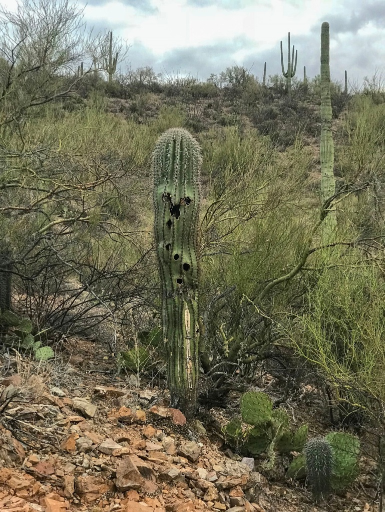 SHSU, LEAP Center, Saguaro National Park, Arizona, Gould Mine Trail