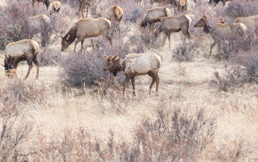 SHSU, LEAP Center, LEAP Ambassadors, Rocky Mountain National Park