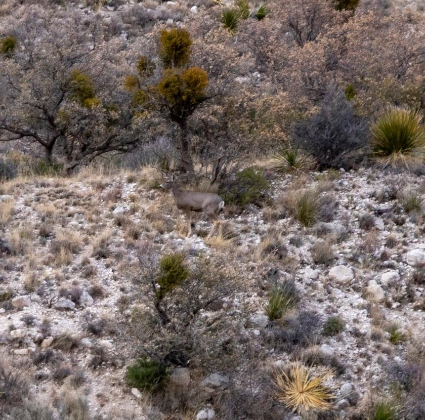 shsu, LEAP Center, LEAP Ambassadors, Guadalupe Mountain National Park